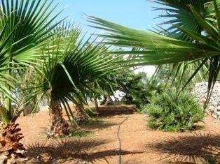 Tuin  Huis 45348 Pescoluse