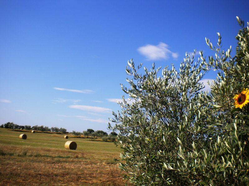 Uitzicht vanaf de woning  Huis 79432 Cortona